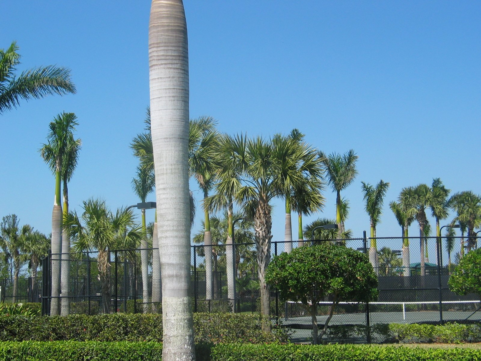 Heron Bay Tennis Courts